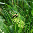 Bee in the Green by Rowan  Lewgalon