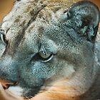 Cougar by Ashley W