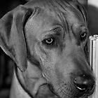 Rufus by Mark Elshout