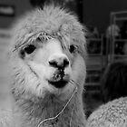 Lama Land by Mark Elshout