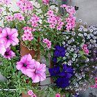 My little garden by Esperanza Gallego