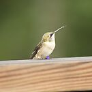 Hummingbird by Mindy47