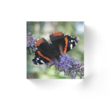 'Red Admiral from above' Acrylic Block