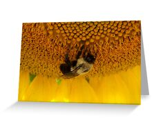 Pollination Greeting Card
