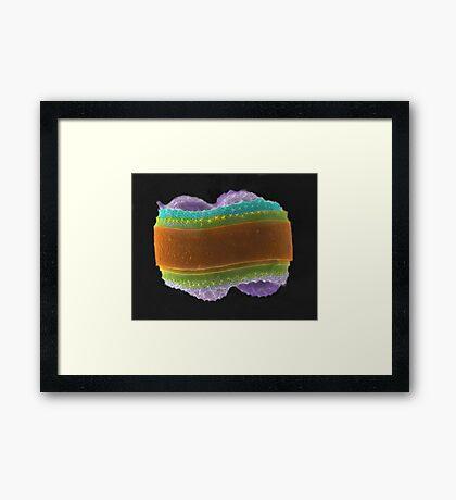 Knitted Colar Framed Print