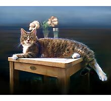 CARUSO my Cat Photographic Print