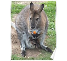 What's That You're Eating Mum? - Wallaby Poster