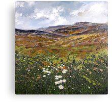 Derbyshire Dales n Daisies Canvas Print