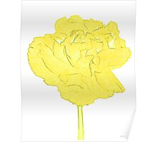 Yellow carnation Poster