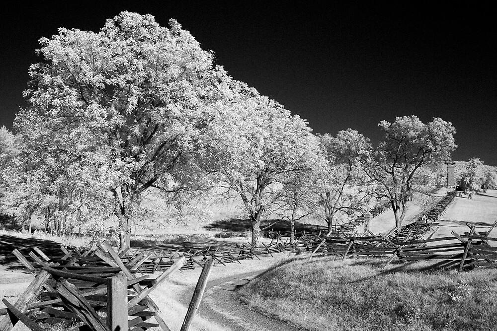 The Sunken Road by Bowman1