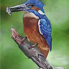 Kingfisher by Cantus