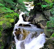 Avalanche Creek  by William Newland