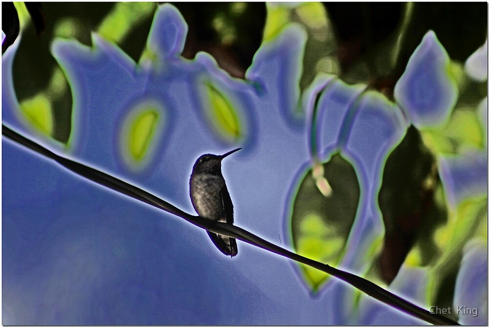 Bird On A Wire by Chet  King