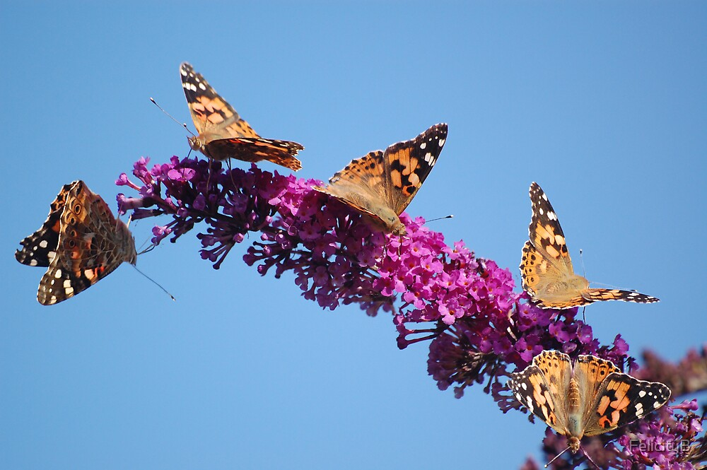 The Butterfly Bush by FelicityB