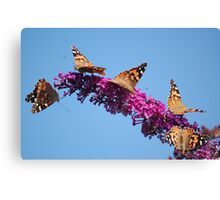 The Butterfly Bush Canvas Print