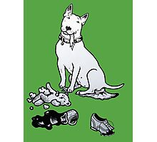 The Helpful Bull Terrier Photographic Print