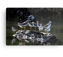 Menagerie on a Tiny Floating Island Metal Print