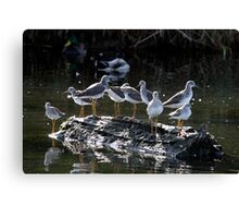 Menagerie on a Tiny Floating Island Canvas Print