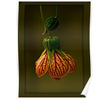 lantern light (arbutilon) Poster