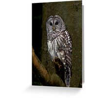 Barred Owl - Spirit Park, BC Greeting Card