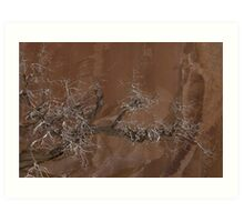 Canyon Tree - Escalante Grand Staircase National Monument Art Print