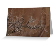 Canyon Tree - Escalante Grand Staircase National Monument Greeting Card