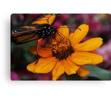 Feeding Monarch Canvas Print
