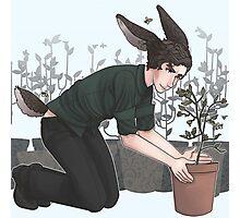 oh bunny bee Photographic Print