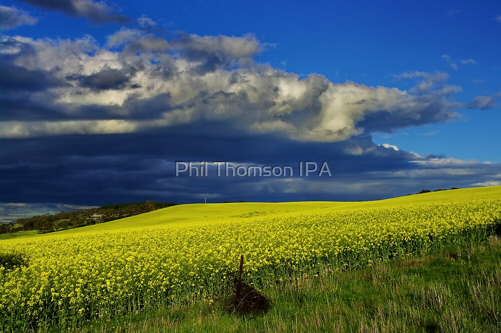 """The Yield"" by Phil Thomson IPA"