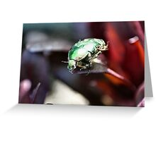The rare rose chafer - image 2 Greeting Card