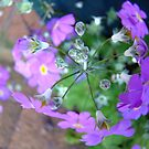anatomy of a flower ~ divine design by Jan Stead JEMproductions