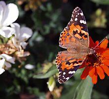 Butterfly by Ken Lowden