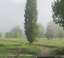 Misty farmland, Northland by Paul Mercer