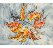 Koi Carp Photographic Print
