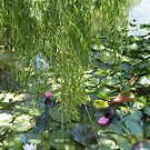 Ode to Monet's garden- Blue Lotus Water lily farm, Victoria  by Lynne Kells (earthangel)