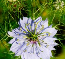 Blue Nigella Flower Sticker