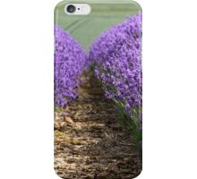 lavender fields in england iPhone Case/Skin