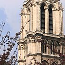 notre dame cherry blossoms by Kent Tisher
