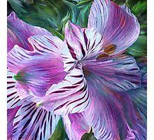 Lily Moods - Purple Photographic Print