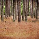Swedish grass : ) by Olav Lunde