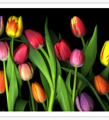 Colorful Tulips Sticker