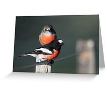 Scarlet Robins Greeting Card