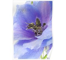 Delphinium blue Poster