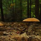 Boletus  by RonSparks