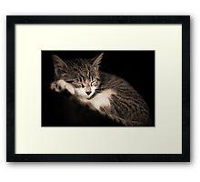 The Kitten Framed Print