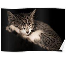 The Kitten Poster