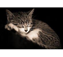 The Kitten Photographic Print