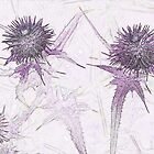 Purple thistle by Sandra O'Connor
