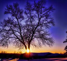Purple Haze Suntree by Julie Everhart