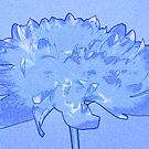 Blue dahlia by Sandra O'Connor